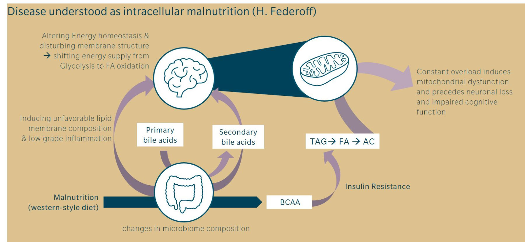 factors influencing alzheimer's disease, gut-brain interactions and the role of micochondria and fatty acid metabolism
