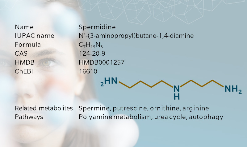 Key information on spermidine, a biogenic amine involved in the regulation of autophagy with broad applications